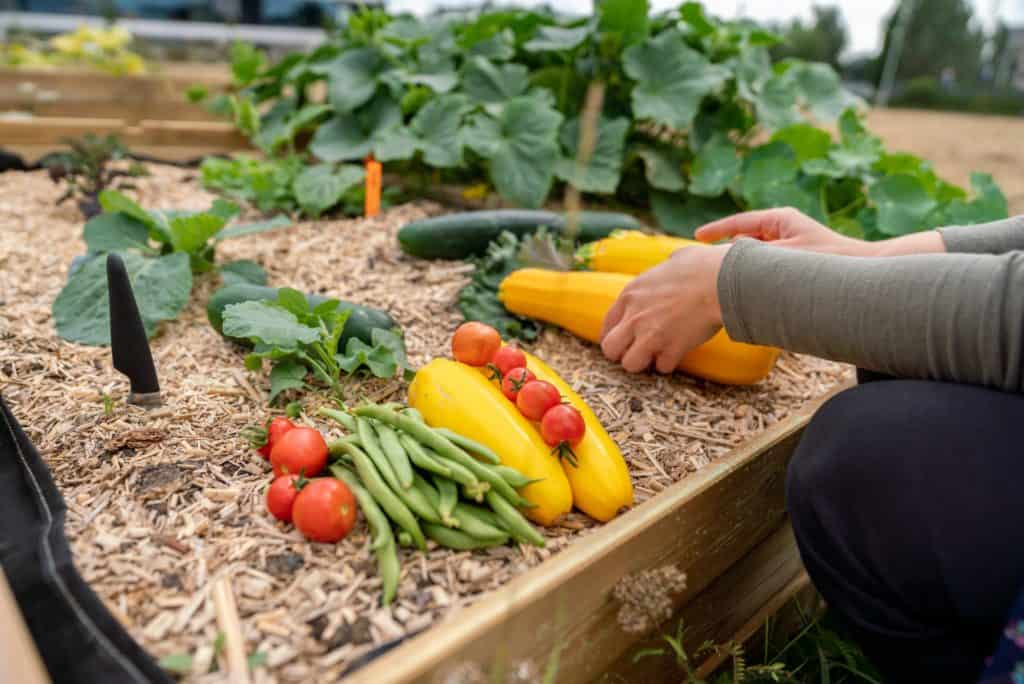 Picture of sell-grown vegetables