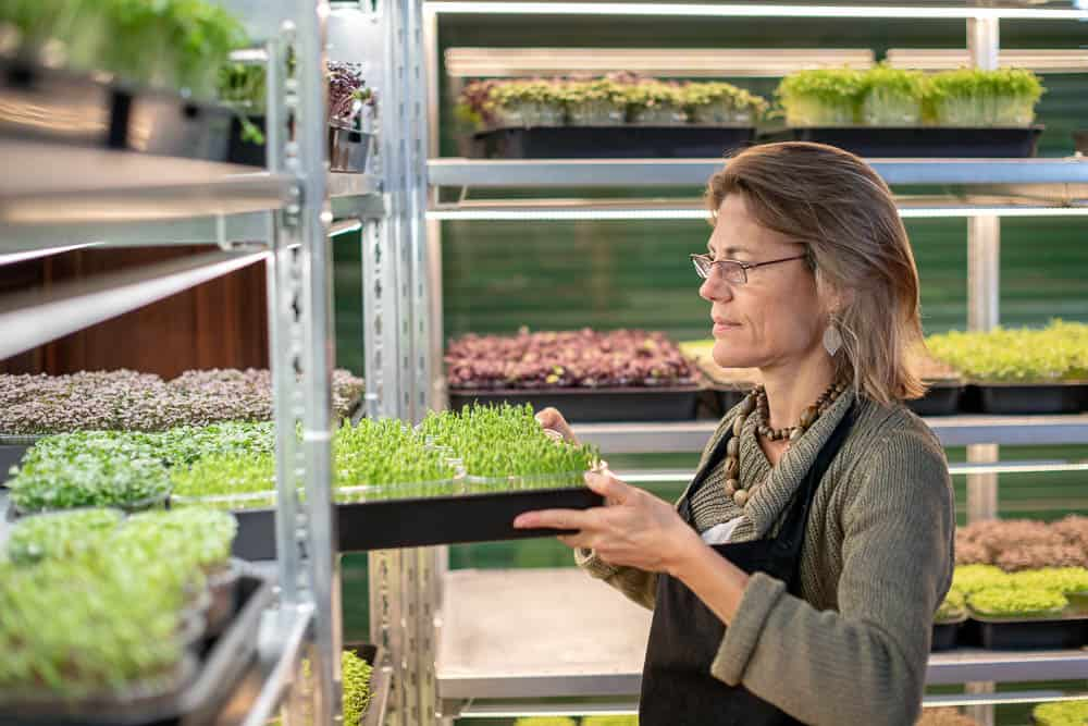 Woman checking on her growing miniplants
